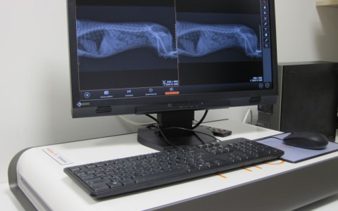 Digitální rentgen s anatomickým programem